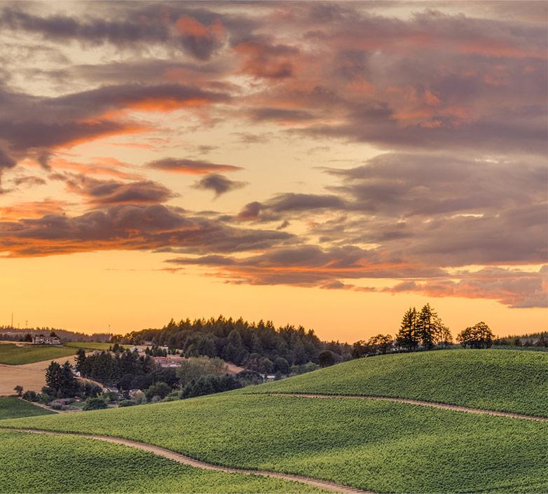SeaBreeze Vineyard, WILLAMETTE VALLEY, OREGON