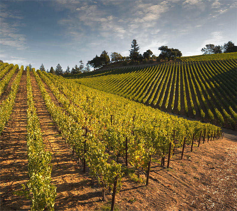 Napa Valley Vineyards, NAPA VALLEY